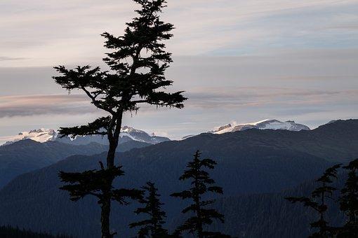 Alaska, Fir Tree, Mountains, Mountain Landscape