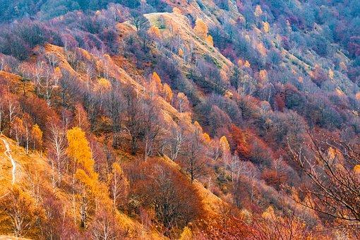 Landscape, Mountains, Forest, Autumn Colours, Hill
