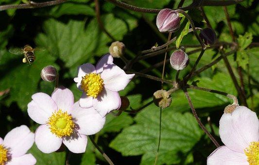 Honey, Bee, Flower, Pollen, Close Up, Nature, Plant