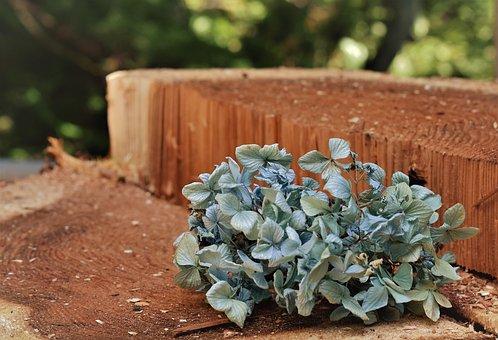 Natural, Hydrangea, Blue, Blue Flowers, Flowers, Bleu