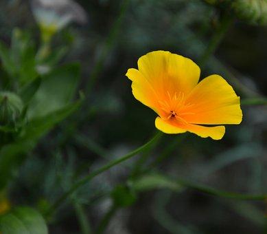 Blossom, Bloom, Bloom, Flower, Plant, Flora, Nature
