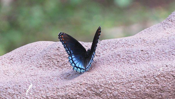 Butterfly, Blue, Insect, Nature, Animal, Wing, Bloom