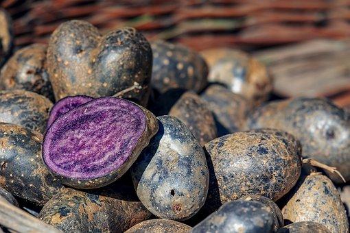 Potatoes, Vitelotte, Delicacy, Tuber, Blue-black, Bio