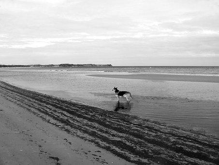 Baltic Sea, Boltenhagen, Panorama, Dog, Bay, Ostseebad