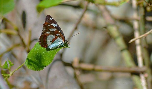 Πεταλύδα, Nature, Colorful, Beautiful