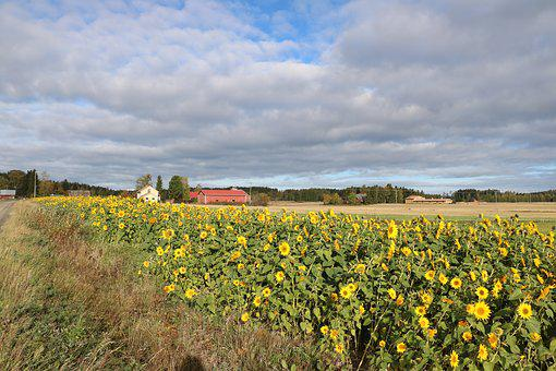 Countryside, Autumn, Flower, Field, Agriculture