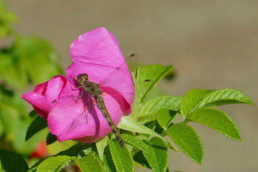 Flower, Blossom, Bloom, Insect, Flight Insect