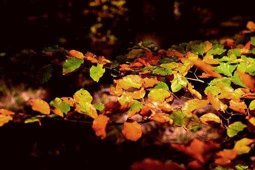 Fall Foliage, Leaves, Autumn, Colorful, Forest, Bright