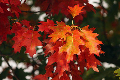 Fall Foliage, Leaves, Colorful, Colored, Autumn, Forest