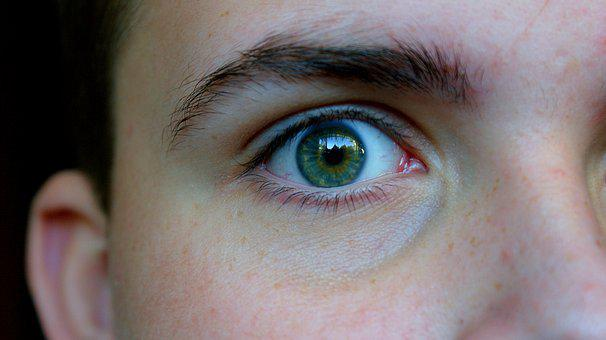 Eye, Green, Iris, Eyelashes, Gold, Freckles, Eyebrows