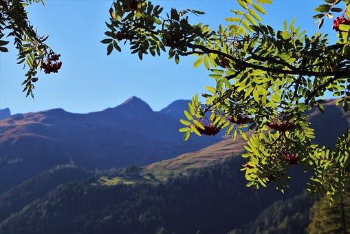 Branch, Rowan, Green, Autumn, Nature, September, Leaf