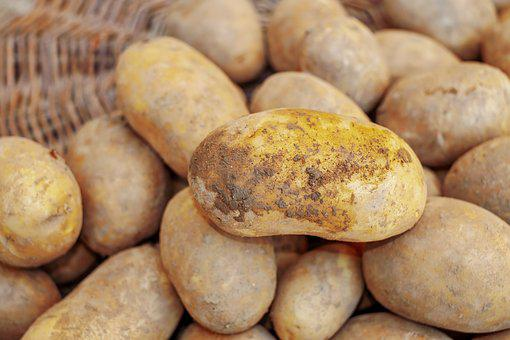 Potatoes, Harvest, Agriculture, Earth Apple, Bio