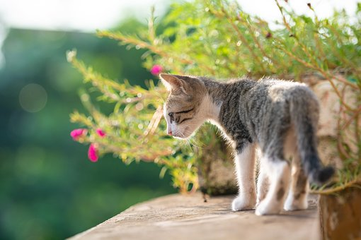 Kitty, Cat, Animal, Young, Cute, Pets