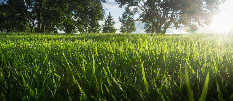 Grass, Wood, Nature, Green, Landscape, Grassland