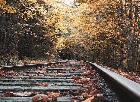 Abandoned, Railway, Fall, Trees, Leaves, Autumn, Yellow