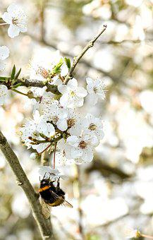 Bee, Insect, Spring, Bloom, Nature, Pollen, Nectar
