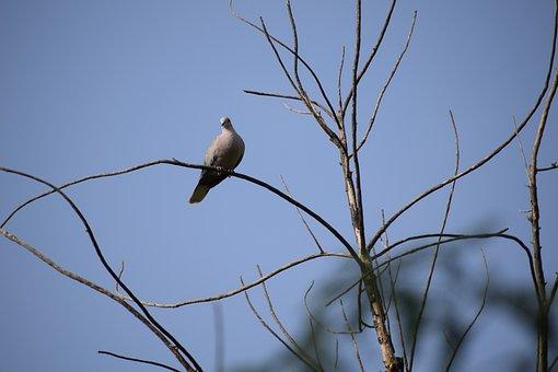 Bird, Tree, Branch, Dove, Nature, Landscape, Flying