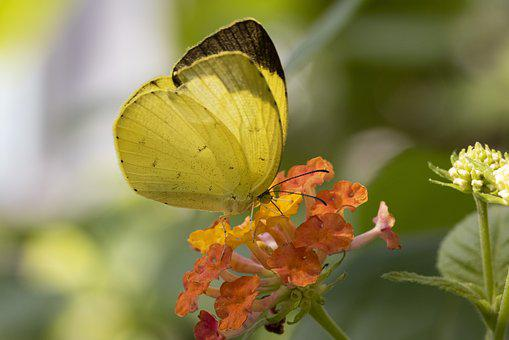 Butterfly, Insects, Nature, Flowers, Wing, Close