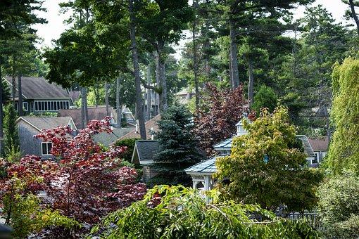 Trees, Beautiful Area, Maine, New England, Scenic