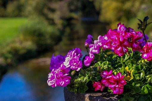 Nature, Landscape, Planters, Stone Pot, Bucket, Plant