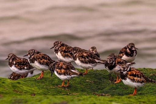 Small Seagulls, Seaside, Birds, Nature, Ocean, Side