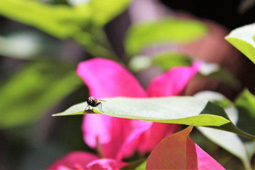 Fly, Garden, Insect, Spring, Fauna, Floral, Animals