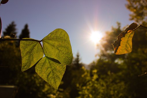 Autumn, Leaves, Leaf, Sun, Light, Green, Brown