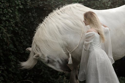 Woman, Horse, White Horse, Shire, Horsewoman, Female