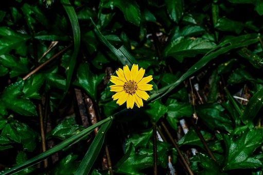 Yellow, Flower, Grass, Spring, Background, Summer