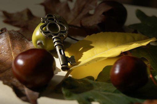 Key, Chestnut, Chestnuts, Leaf, Foliage, Autumn
