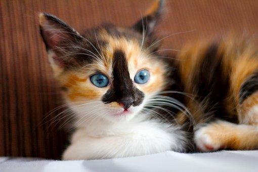 Cat, Feline, Animal, Pet, Cute, Domestic, Kitty, Little