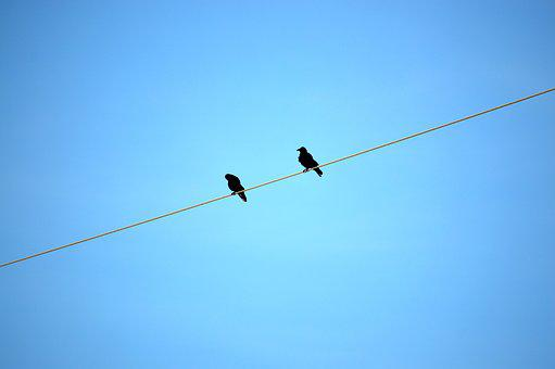Power Line, Birds, Sky, Dig, Power Cable, Energy, Sit
