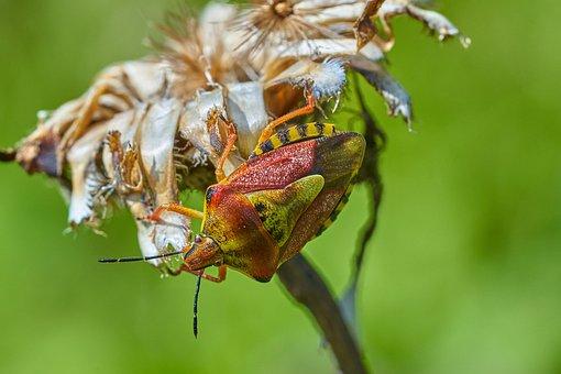 Beetle, Flower, Insect, Plant, Bloom, Pollen, Macro