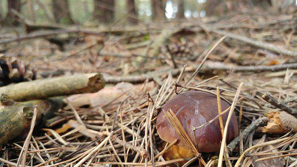 Autumn, Mushroom, Forest, In The Fall, Plant, Mushrooms