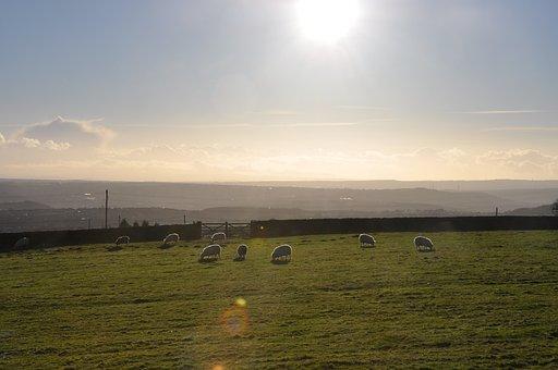 Sheep, Landscape, Rural, Sky, Grass, Pasture, Livestock