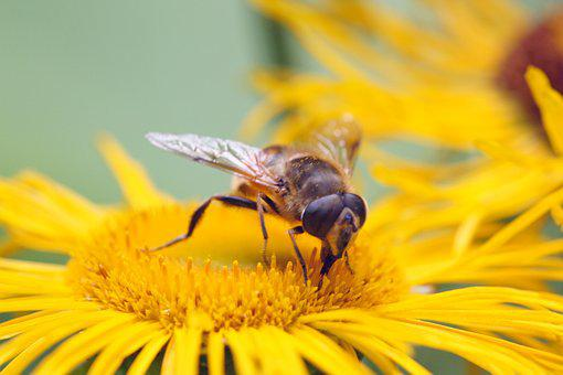 Insect, Flower, Nature, Blossom, Bloom, Macro, Close Up