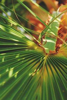 Palma, Krupnyj Plan, Greens, Summer, Bright