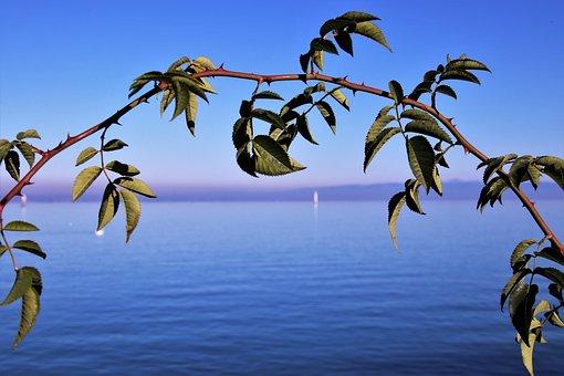 Blue Sky, Sprig, Autumn, The Horizon, Water, Lake