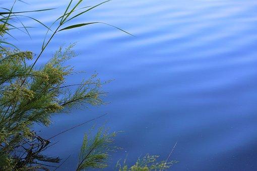 Water, Plant, Background, Nature, Lake, Tree