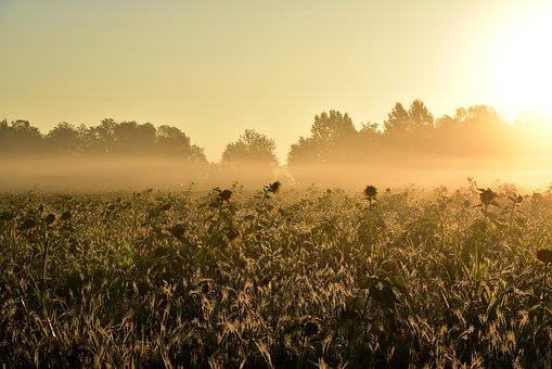 Sunrise, Mood, Fog, Morning Mist, Landscape, Lighting