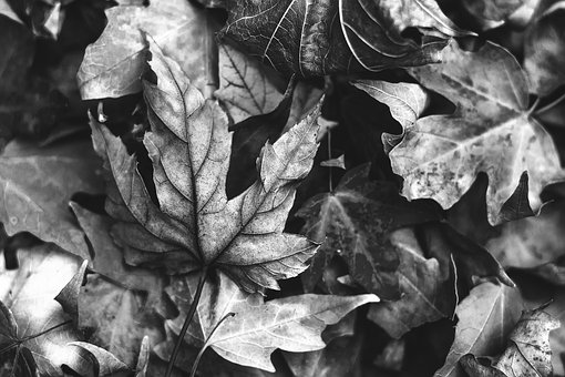 Autumn, Leaves, Nature, Fall Foliage, Leaf, Maple, Mood