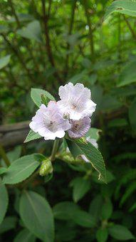 Neelakurunji, Kerala, Munnar, Green, Flower, Violet