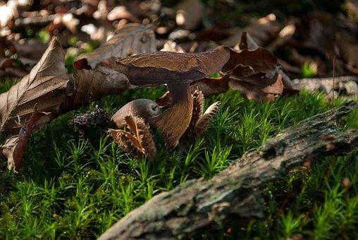 Autumn, Nature, Forest, Leaves, Landscape, Mushroom