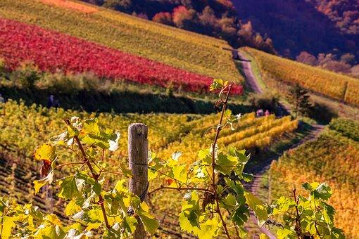 Nature, Landscape, Wine, Vines, Colorful, Autumn, Hill
