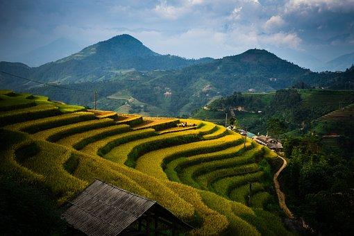 Paddy Field, Version, Tree, Water, Mead, Rice, Flower