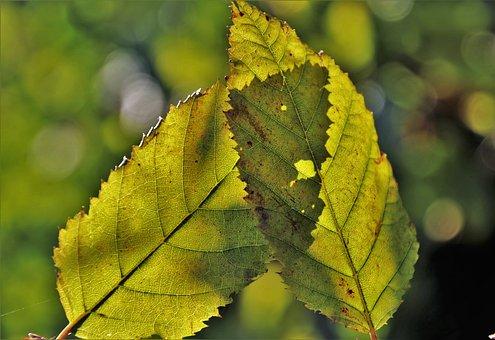 Para, Foliage, Autumn, Collapse, Color, Yellow, Feeling
