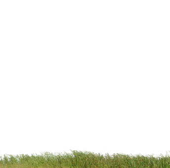 Grass, Grass With No Background, Nature, Green, Plant
