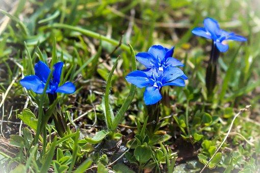 Flowers, Mountain, Nature, Landscape, Prairie, Summer