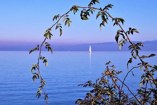 Lake, Water, The Horizon, Sprig, The Stem, Autumn