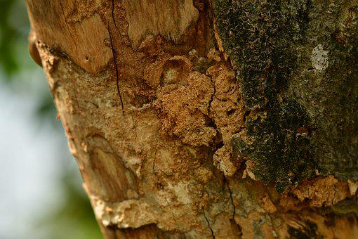 Bark, Dry Wood, Trunk, Timber, Rough, Surface, Texture